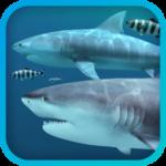 Sharks 3D Logo